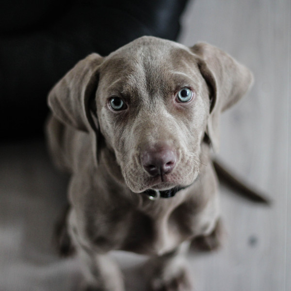 Koeratoit – igas vanuses koer vajab vastavat toitu.