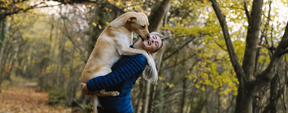 Millist toitu anda täiskasvanud koertele?